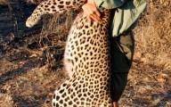 leopard hug
