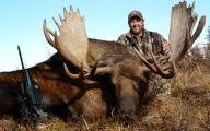 AK moose 1 copy